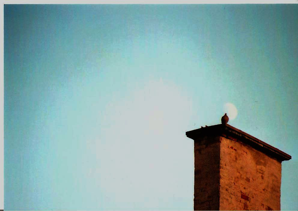 ... and pigeons like to look at the moon
