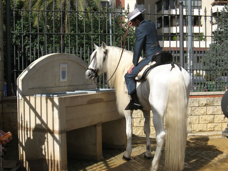 Andalusier an der Pferdetränke (Jerez)