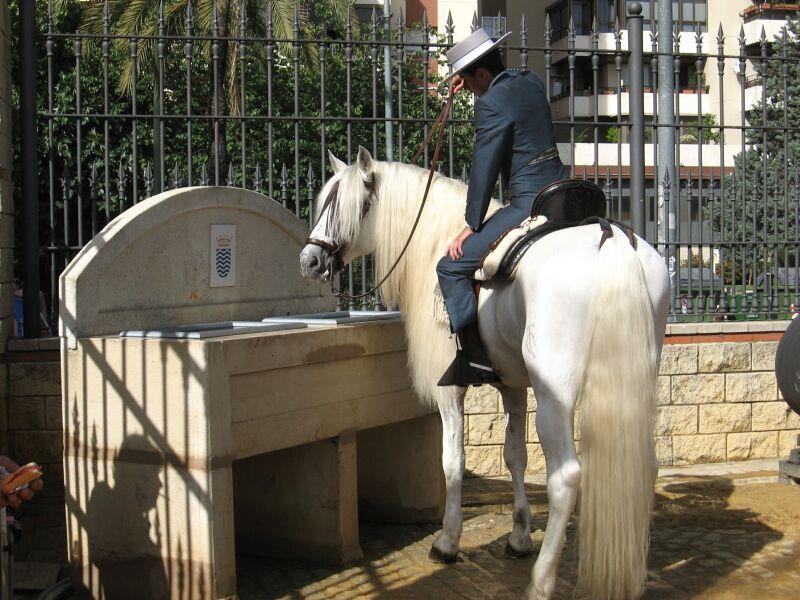 Andalusier an der Pferdetränke (Jerez) Foto & Bild | tiere ...