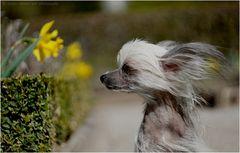 Andato con il vento ;-)