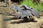 Andere Vögel, andere Sitten ...