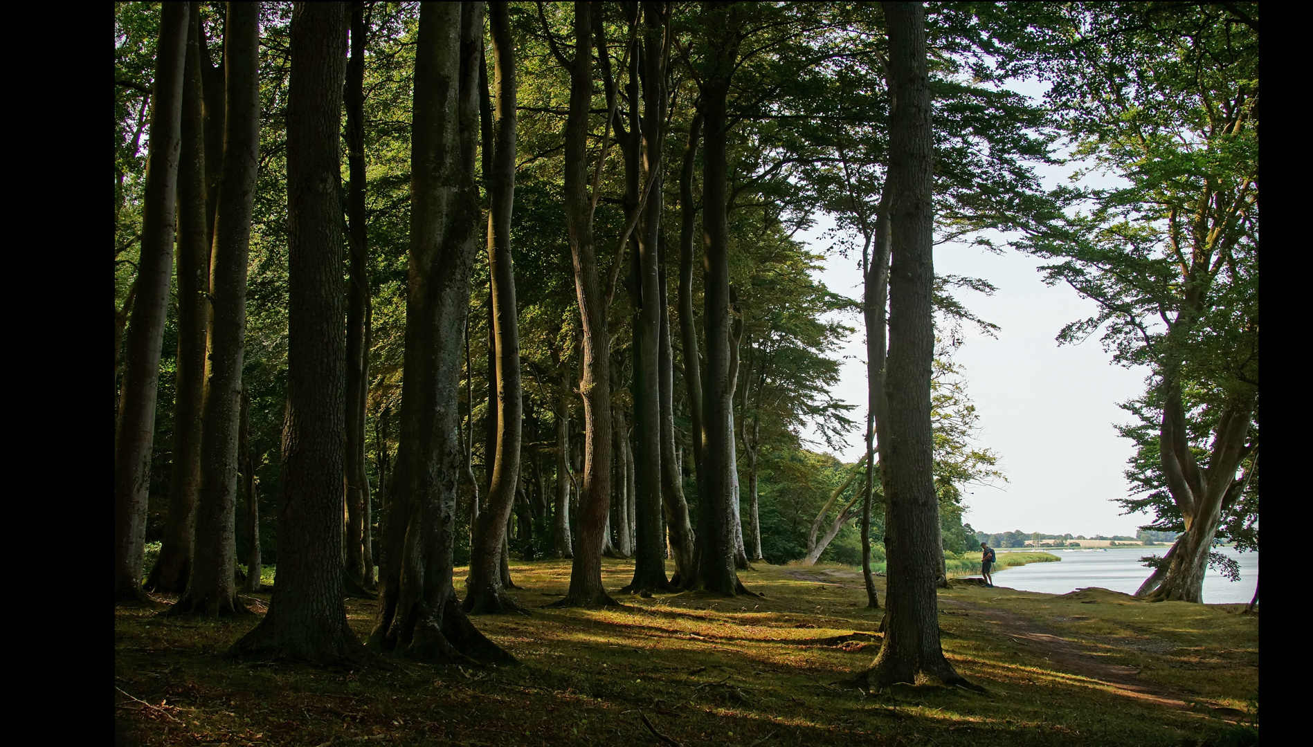 anderer Gespensterwald