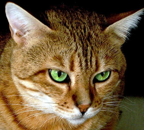 Andra, die Katz mit den unverwechselbaren grünen Augen