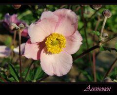 """ Anemone """