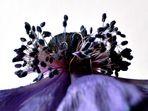 Anemone - Detail