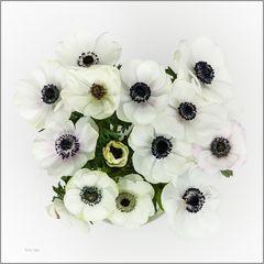 Anemonen in Weiss.
