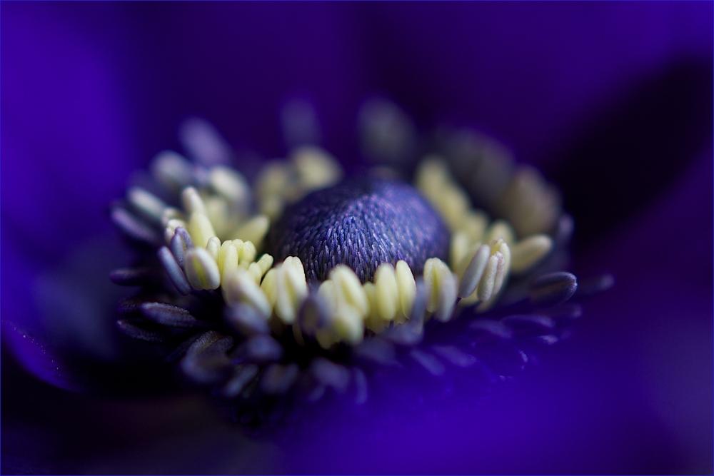 ... anemonenblau ...