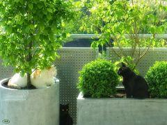 Anfang der Katzenfreundschaft...