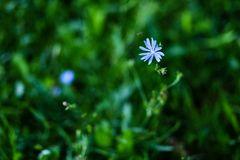 Anflug auf die Blume
