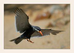 Anflug eines flinken Vogels