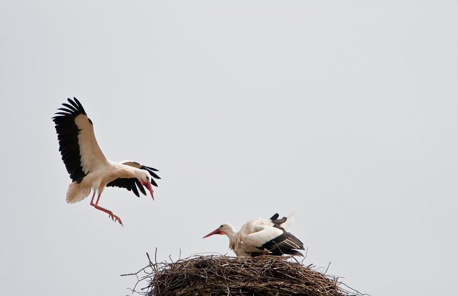 Anflug - oder Naturfotografie ist wie Angeln