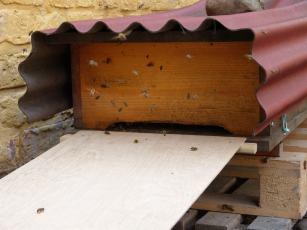 Anflugbrett für die Bienenkiste
