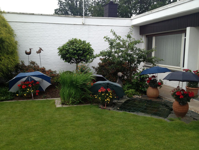 Angeblicher Sommer 2013 im Garten