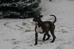 Angel ihr erster Schnee....