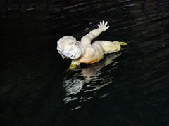 Angelot nageur....