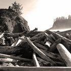 Angeschwemmtes Holz