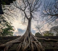 Angkor Wat- Ta Prohm