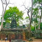 Angkor-Wat - Tempelanlage durch  die Bäume durchgewachsen