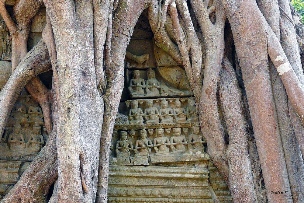 Angkor-Wat - Tempelschmuck in der Würgefeige