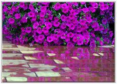 angolo di giardino...