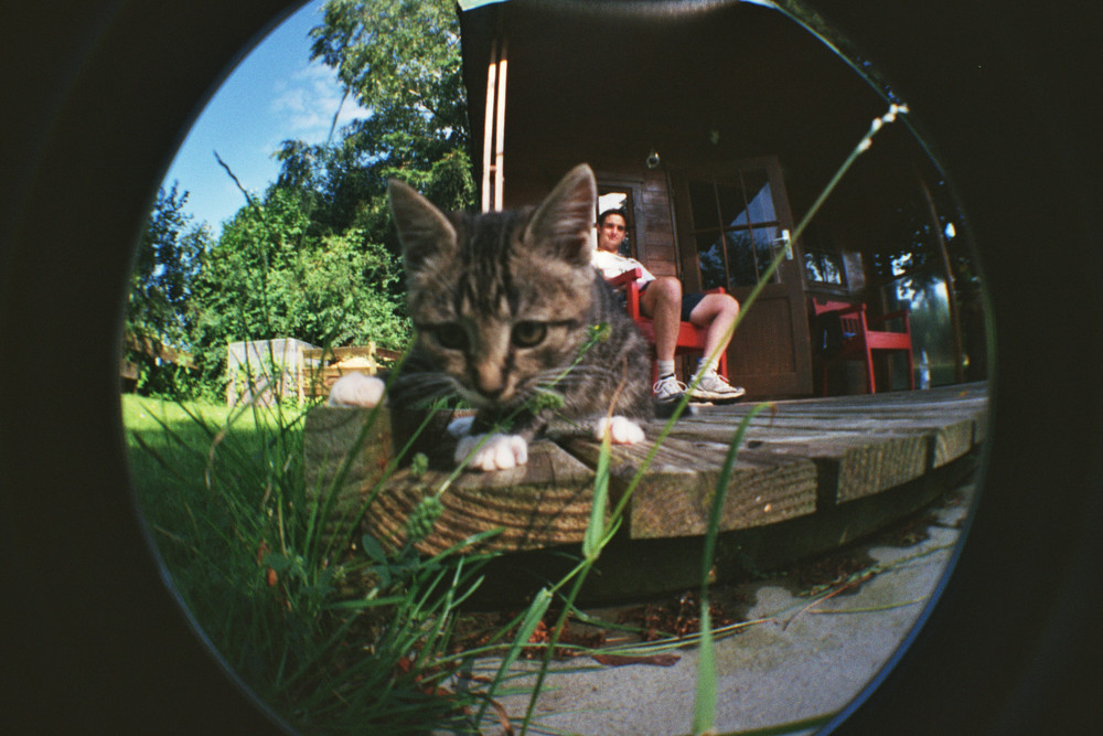 Angriff der Mini-Me-Killer-Katze