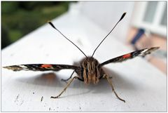 Angriff der Schmetterlinge!