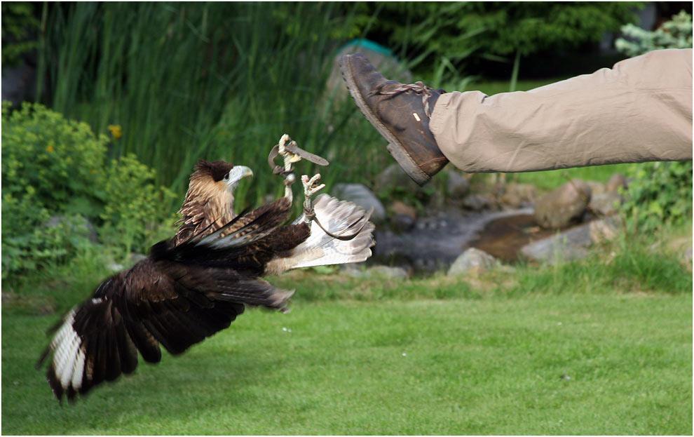 """Angriff...oder """"Kommt ein Vogel geflogen..............."""""""