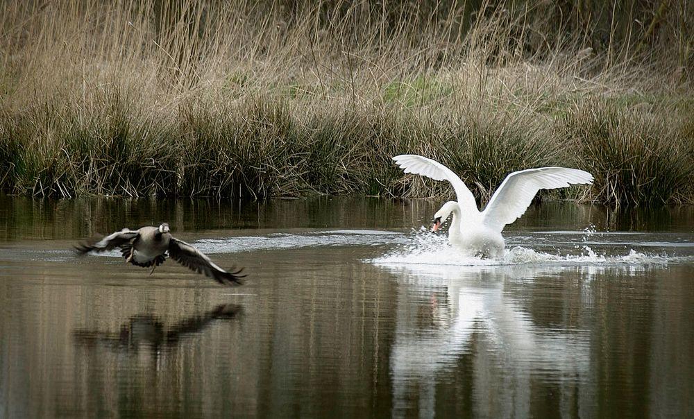 Angry bird....