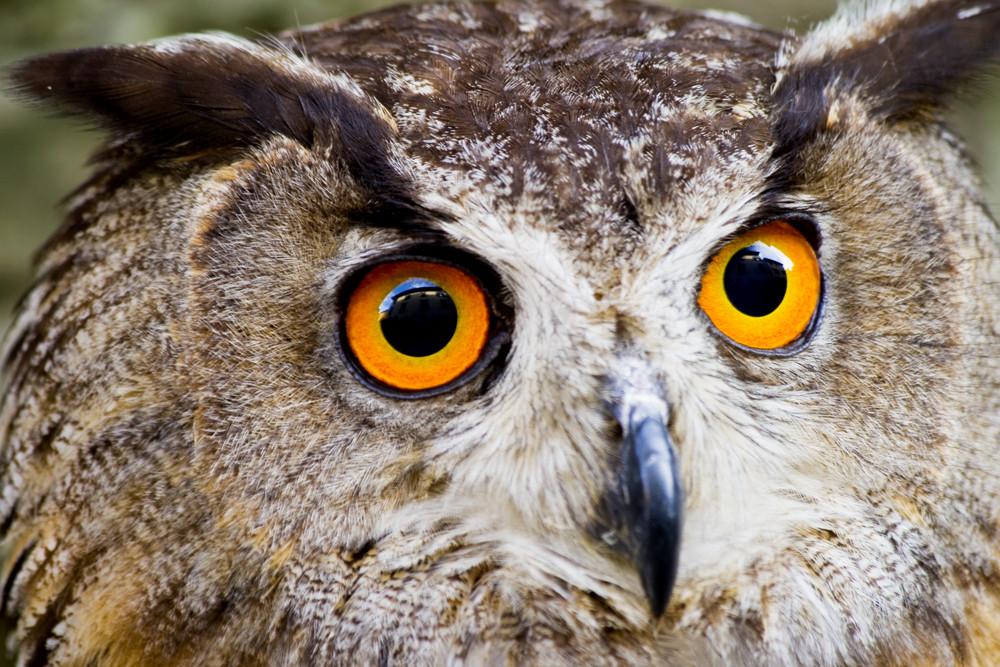 Animal Close-Up 2