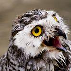 Animal Close-Up