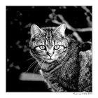 ... animal companion ...