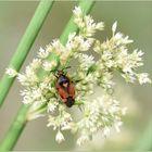 Animal Flower