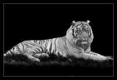 Animal on Black #001