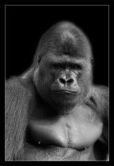 Animal on Black #005