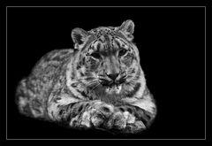 Animal on Black #008