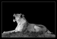 Animal on Black #009