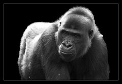 Animal on Black #010