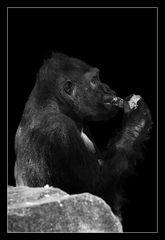 Animal on Black #013