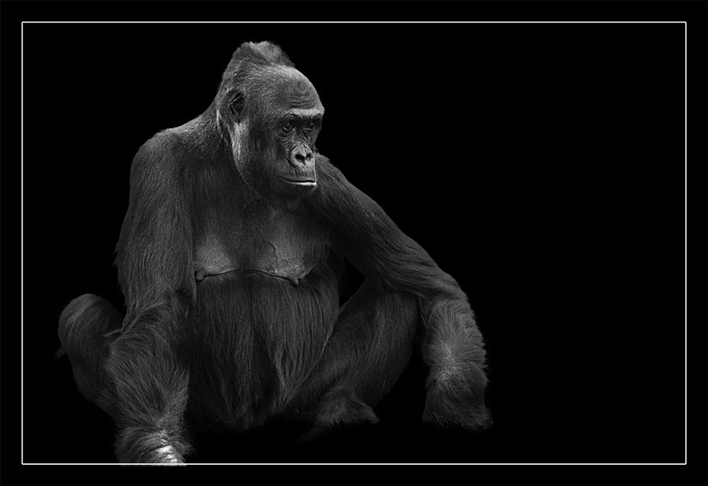 Animal on Black #015