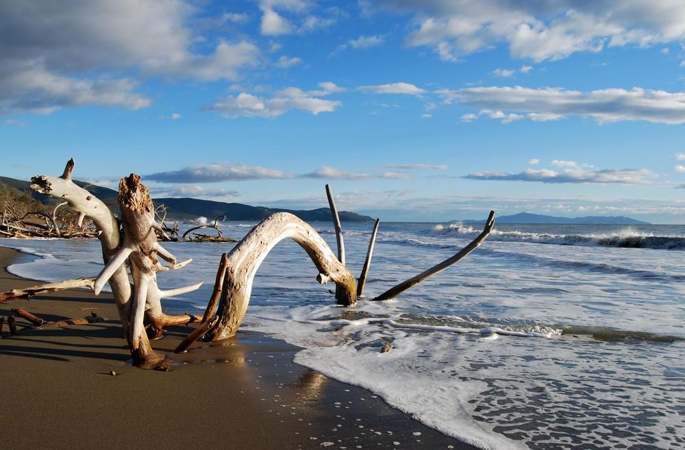 Animali marini foto immagini paesaggi mare natura for Immagini coralli marini