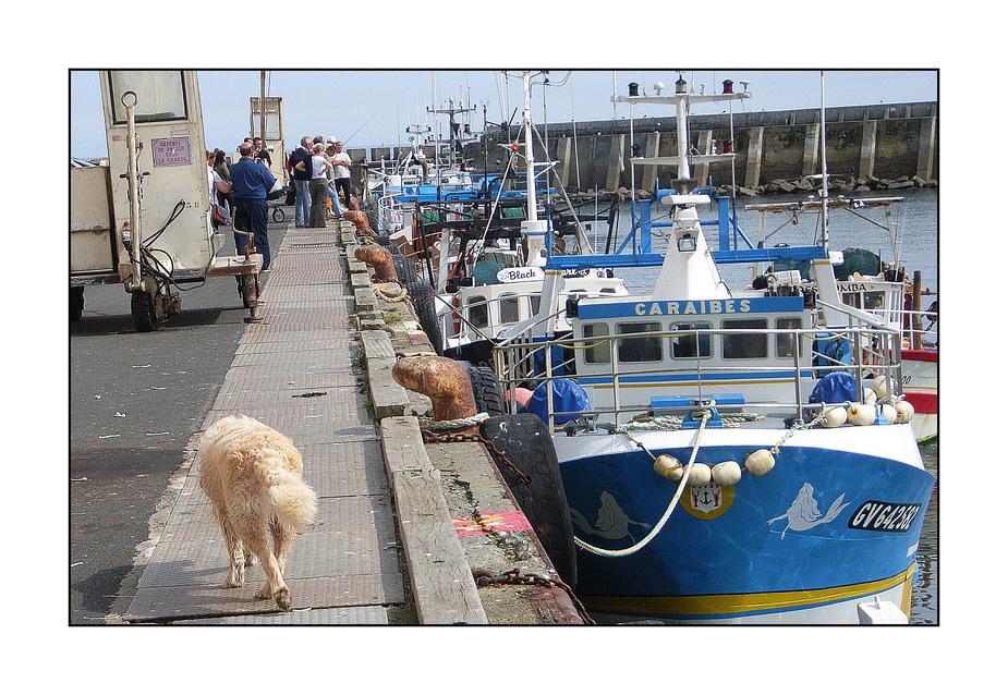 Ankunft der Fischerboote im Hafen von Lesconil