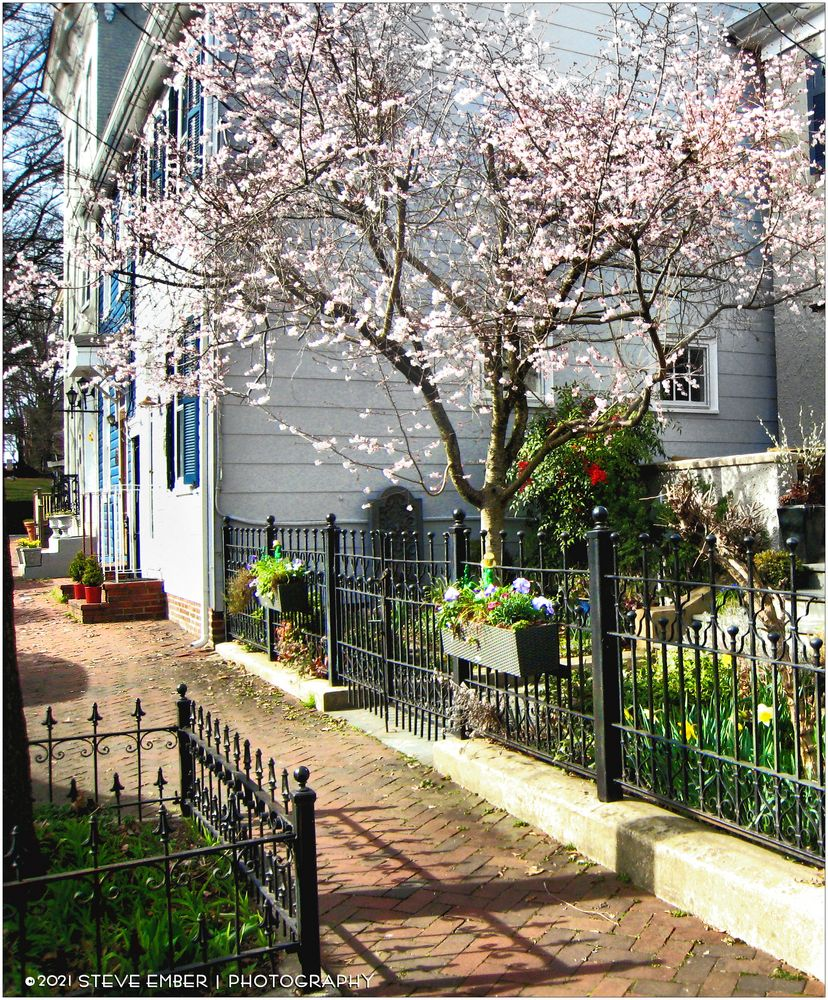 Annapolis Spring No. 1 - Early Springtime along Prince George Street