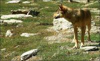 Anni Wolf II