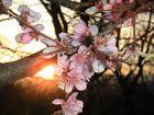 Annuncio di Primavera - Spring is coming