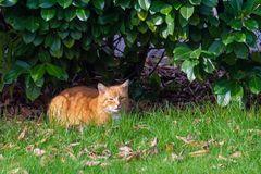 Anonymer Besuch im Garten