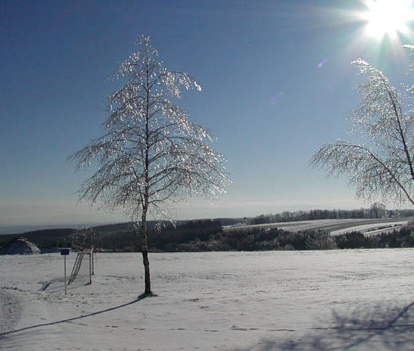 another ice-tree