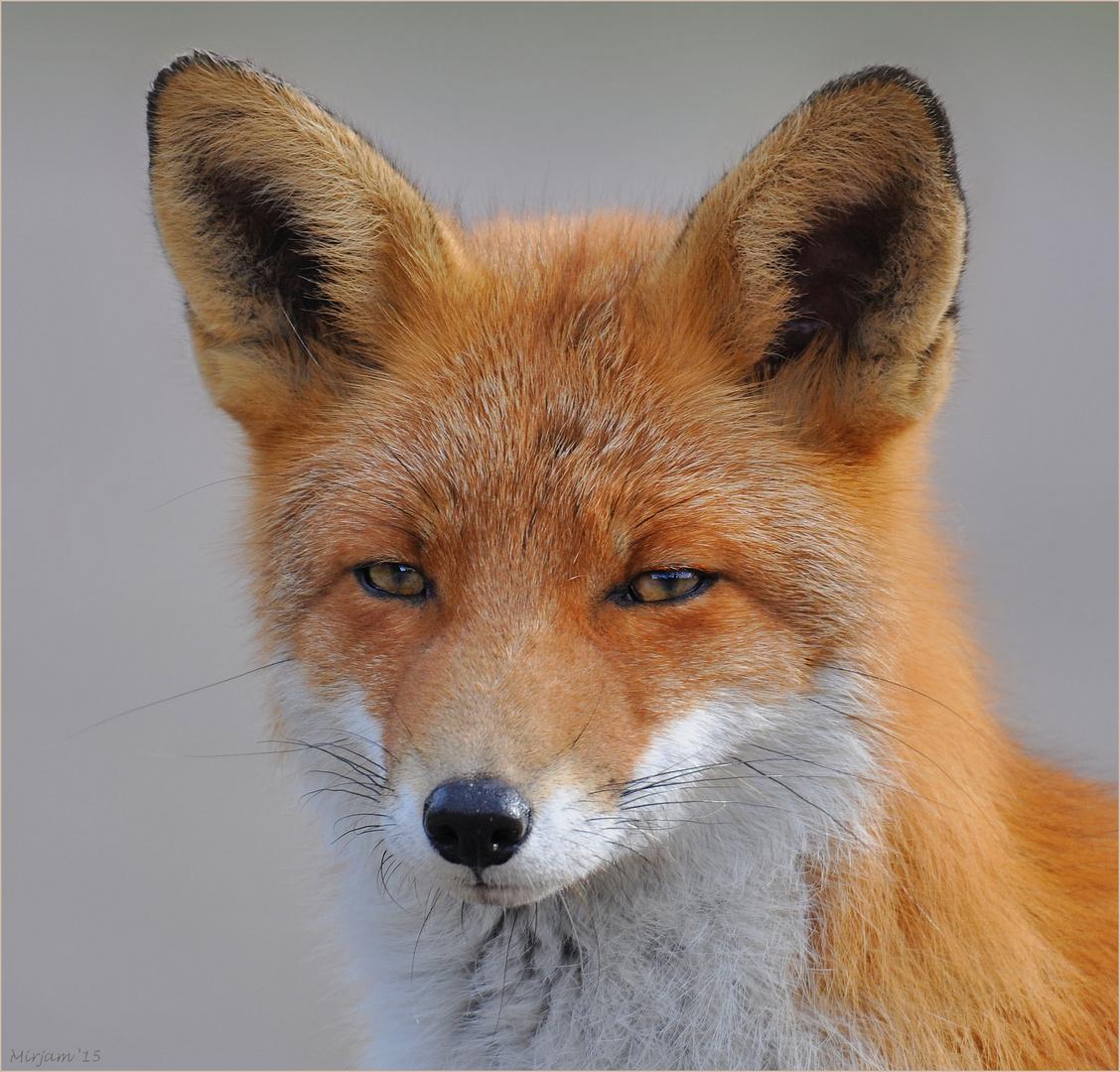 Another little fox ..