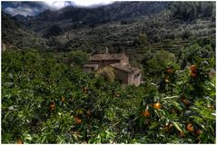 Another view...oranges