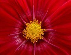 Ansichten einer Blüte