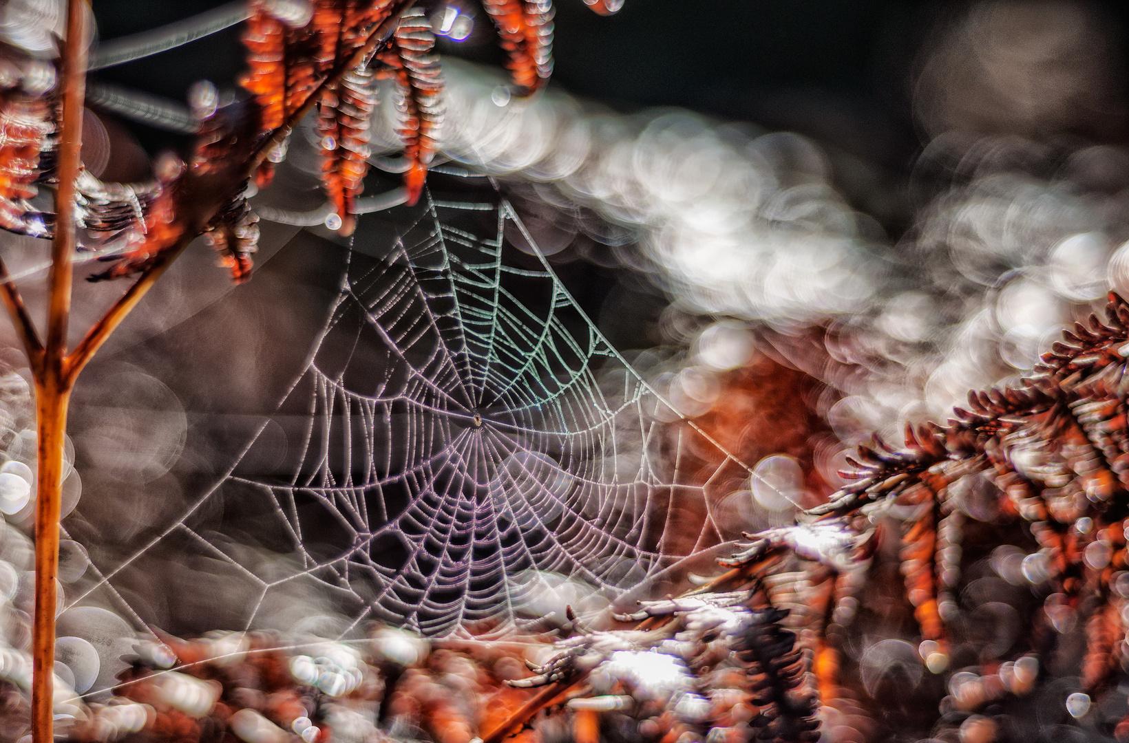 Ansichten ... vom Spinnennetz im Adlerfarn